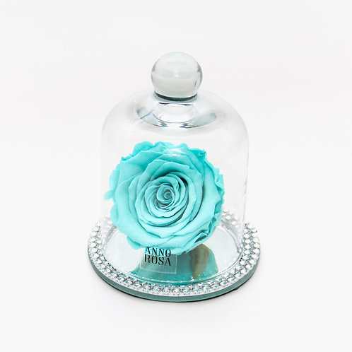 Tiffany Blue Rose that lasts a year