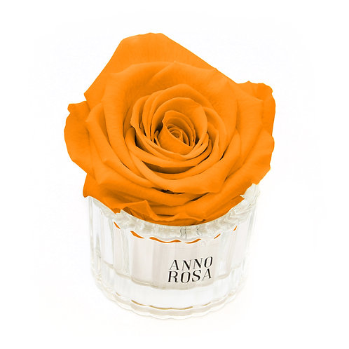 ELEGANT INFINITY ROSE - ORANGE