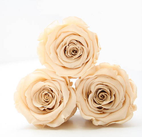 year long roses, roses, forever roses, roses, infinity roses, forever roses, home decor, home decor ideas, home decor ideas, ideas for home decor, pink home decor, summer home decor, home decor, home decor ideas, ideas for home decor, home decor, decor ideas, forever roses, brighten up your home this winter , preparing your home for winter,