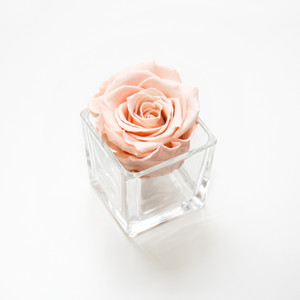 preserved rose forever rose eternity rose roses that don't die peach rose glass jar home decor home decor ideas home inspo bedroom ideas home decor