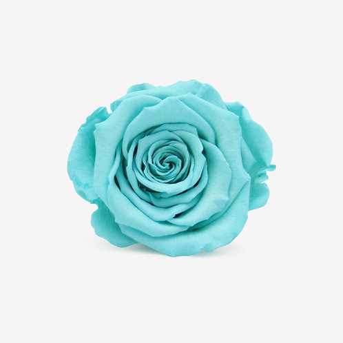 Aqua Preserved Infinity Rose That Lasts A Year