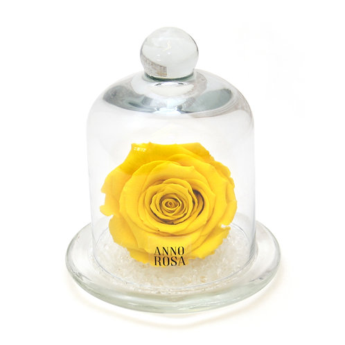 CLASSIC BELLE SINGLE INFINITY ROSE - YELLOW