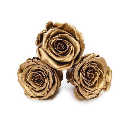 INFINITY ROSES - GOLD