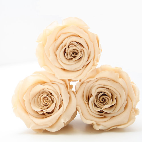 Champagne roses that will last a year