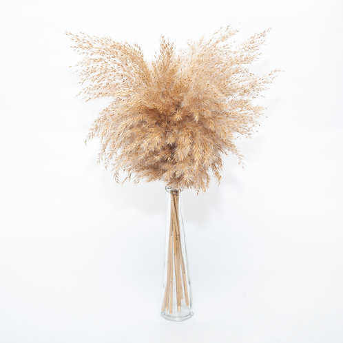 PAMPAS REED PLUME (STEMS ONLY NO VASE)
