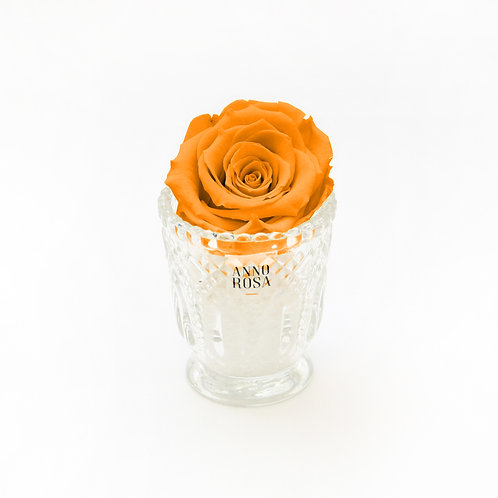 Orange Infinity Rose in Vintage Vase