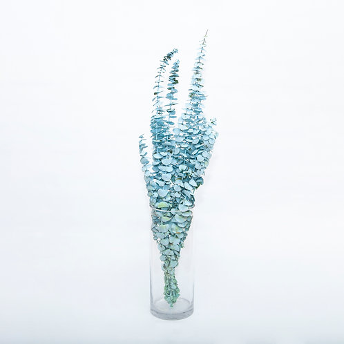 FROSTED BABY BLUE - PREMIUM EUCALYPTUS – BUNCH (STEMS ONLY NO VASE)