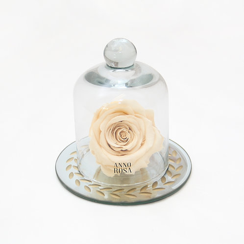 Champagne Eternal Preserved Rose that lasts a year