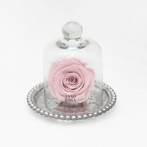ANTIQUE BELLE SINGLE INFINITY ROSE - PINK