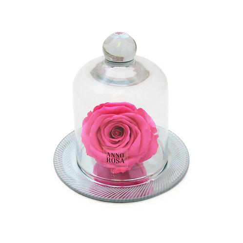 GEOMETRIC BELLE SINGLE INFINITY ROSE - FUCHSIA PINK