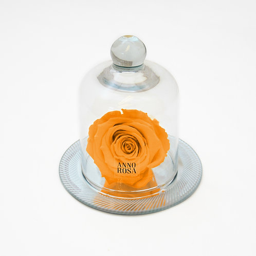 Orange Eternity Rose in Belle Vase