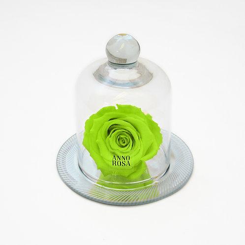 GEOMETRIC BELLE SINGLE INFINITY ROSE - BRIGHT GREEN
