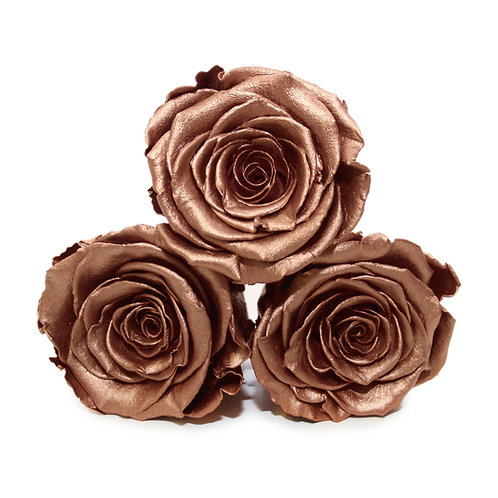 INFINITY ROSES - ROSE GOLD