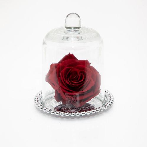 DELUXE WINE ANTIQUE BELLE SINGLE INFINITY ROSE