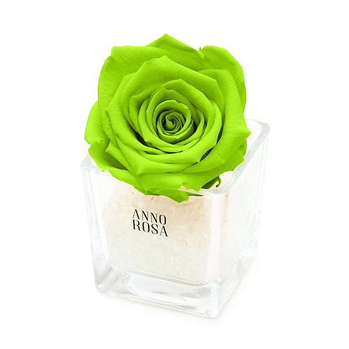 SINGLE INFINITY ROSE - BRIGHT GREEN