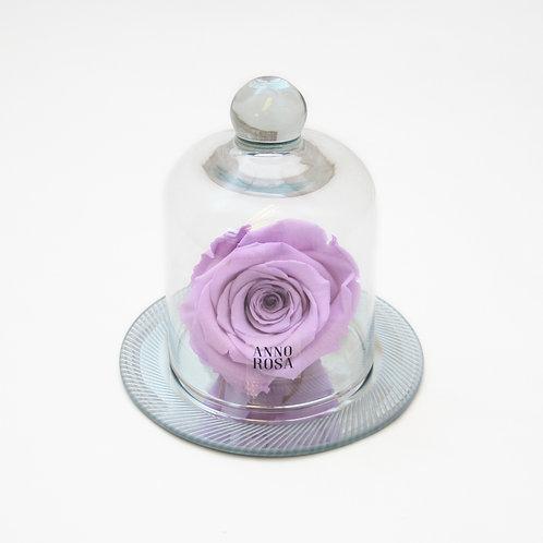 Lilac Eternal Rose