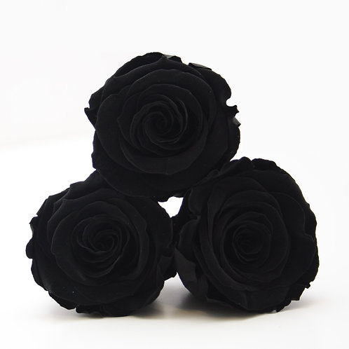Black roses that will last a year