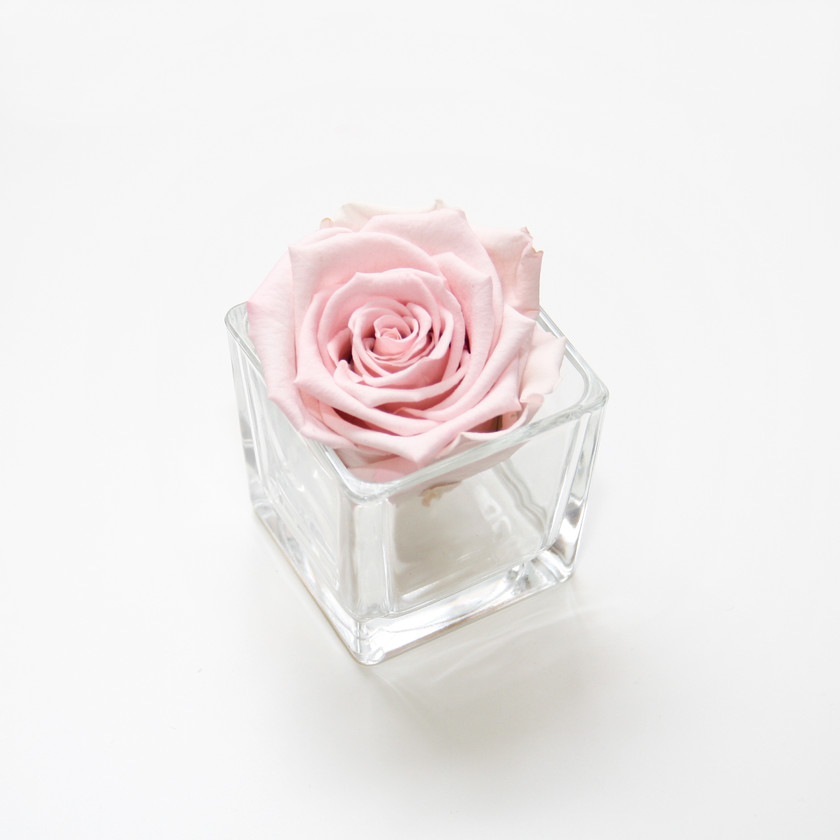pink rose, pink roses, infinity rose, forever rose, forever rose, forever roses, preserved roses, infinity rose, home decor, home interior, interior design, home design, design ideas, first home, first home decor, decor