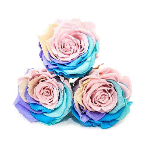 INFINITY ROSES - RAINBOW