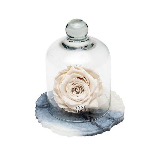 MARBLE BELLE SINGLE INFINITY ROSE - IVORY