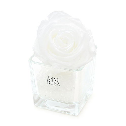 SINGLE INFINITY ROSE - WHITE