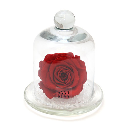 VALENTINES COLLECTION - RED BELLE ROSE