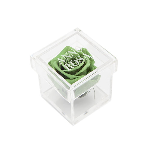 SAGE GREEN INFINITY ROSE AMOUR COLLECTION