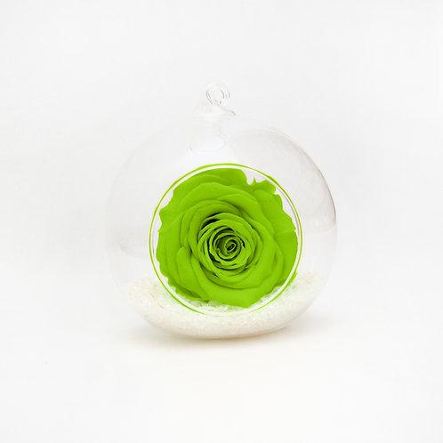 Bright Green Year Lasting Rose