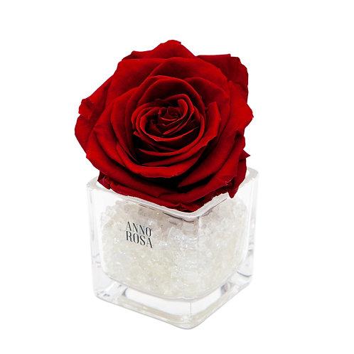 SINGLE INFINITY ROSE - WINE