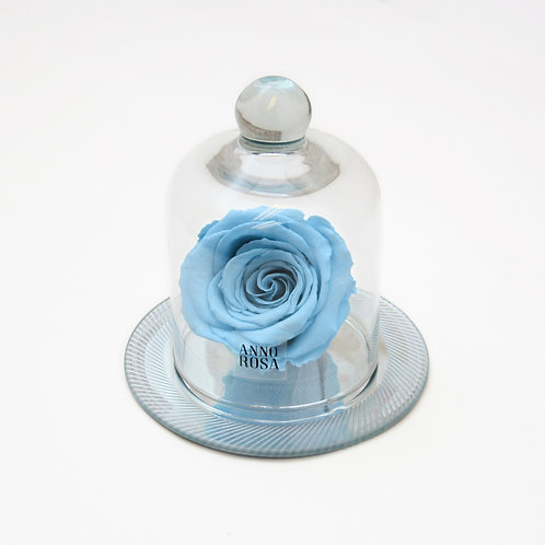 Baby Blue Year Long Rose