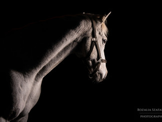 Black background equestrian portraits explained
