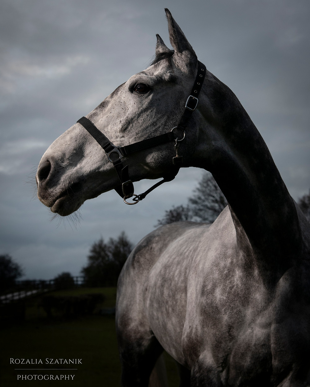 horse portrait - horse photography - equestrian photography