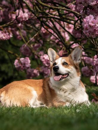 Spotlight on dog photography