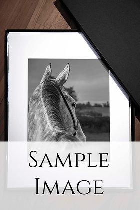 Print + digital image