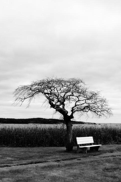 Tranqual View