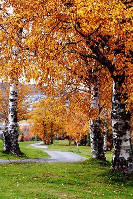 yellow birch trail