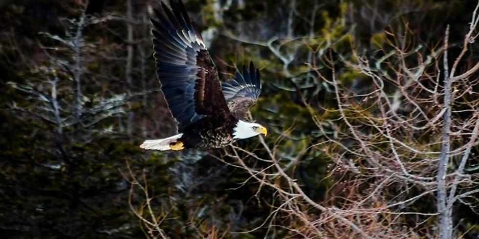 Baldhead Eagle Tour