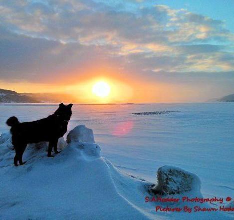 Bear watching the sunset