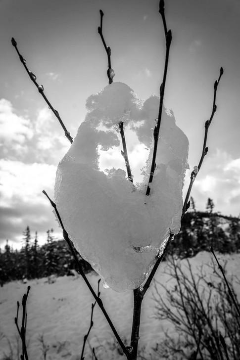 Loving Snow