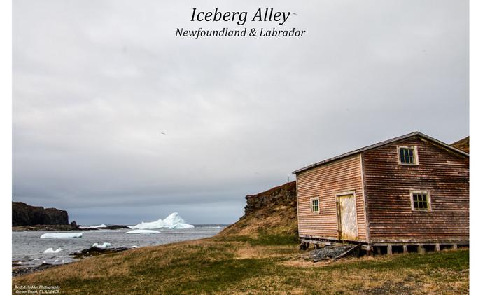 Iceberg Alley St. Lunaire-Griquet