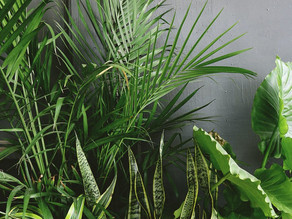 4 Common Houseplant Mistakes and How to Avoid Them
