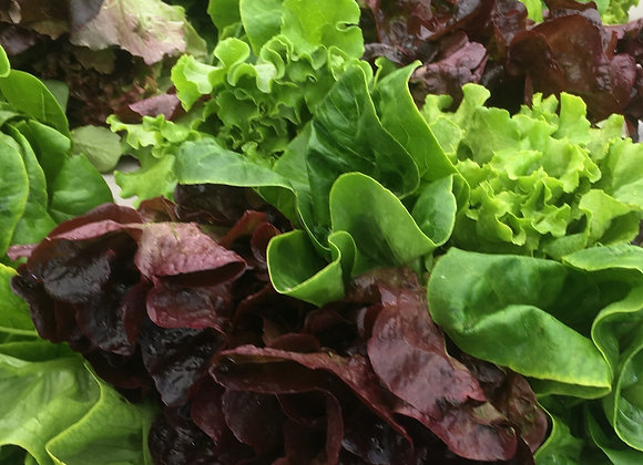 Mixed Baby Lettuces- 12 oz bag
