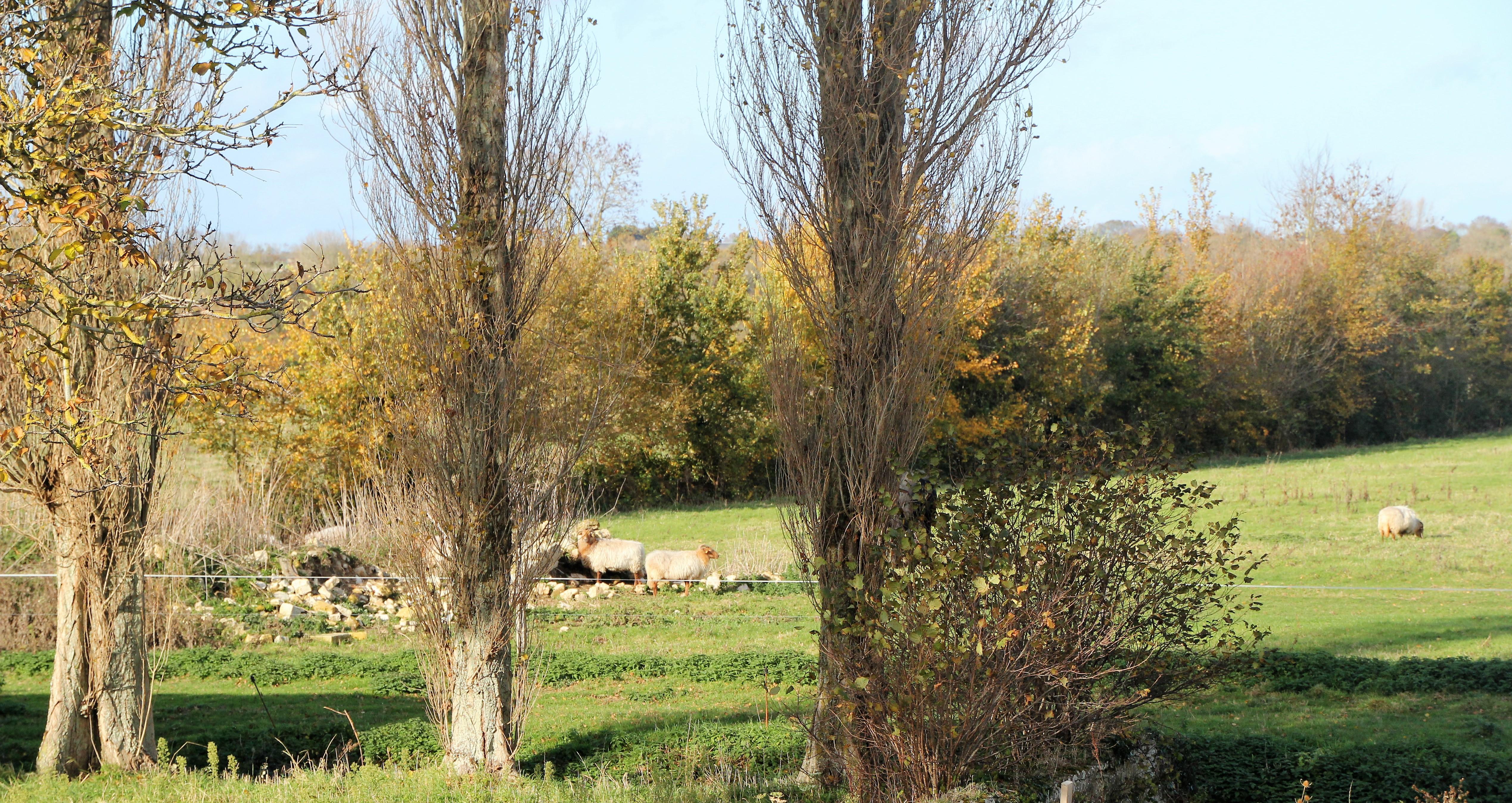 ferme-hay-day-uitzicht