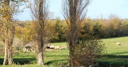 ferme-hay-day-vue-sur-terrain