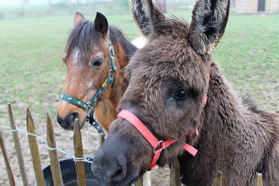 ferme-hay-day-boerderijdieren