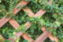 Celosia-de-madera-enredadera-570x381.jpg