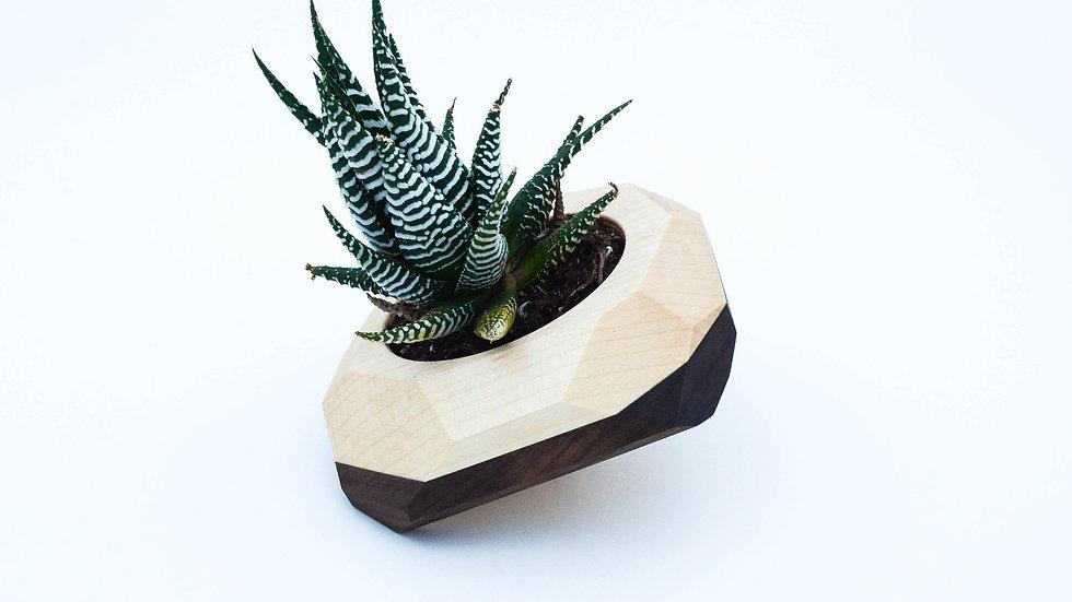 Geometric Tilted Cactus & Succulent Planter