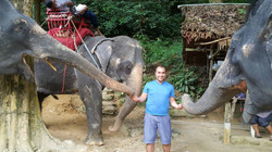 elephants at city tour