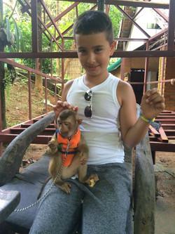 Monkey baby City Tour Phuket