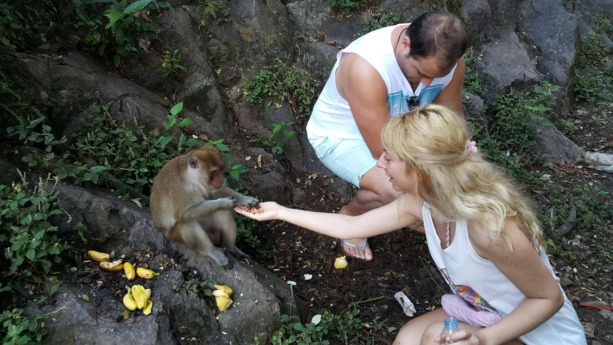feeding monkeys in Phuket
